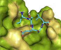 Ligand binding pocket