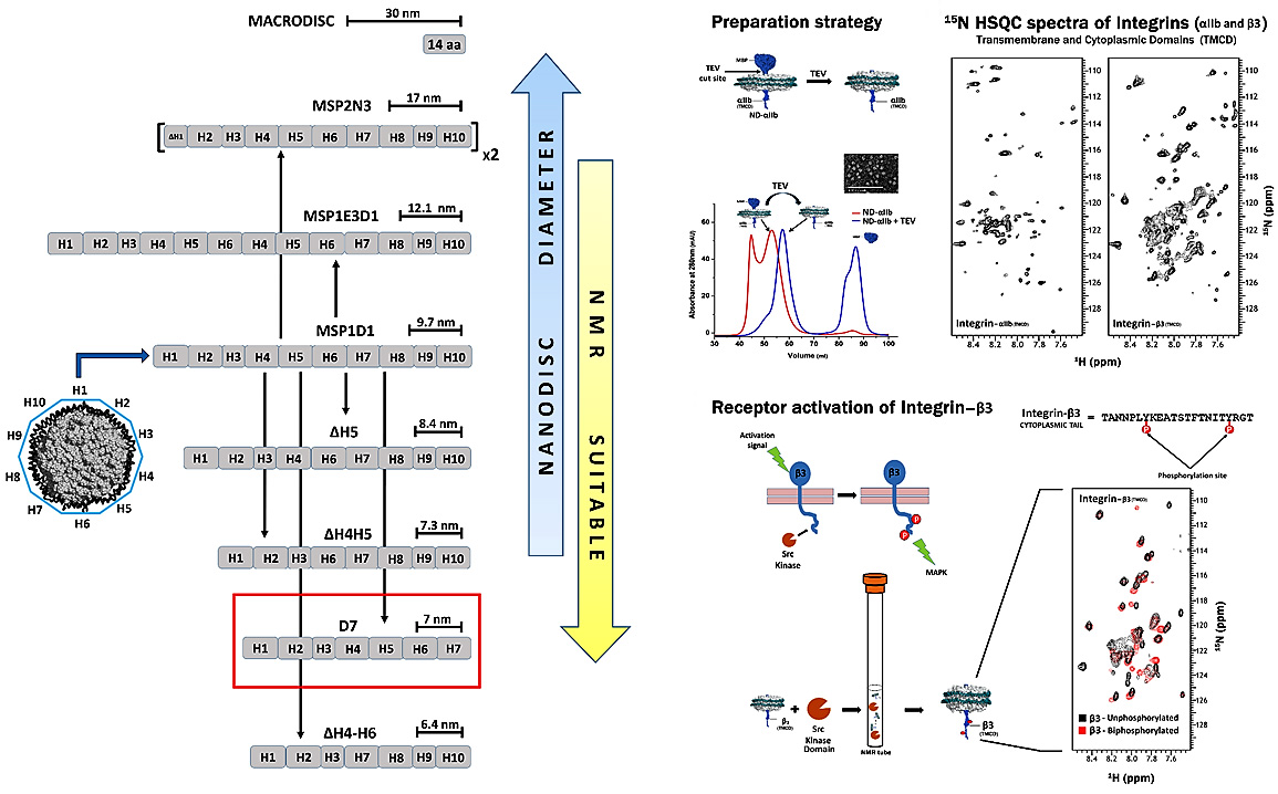 Nanodiscs in NMR