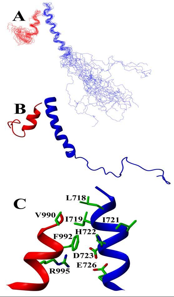 AlphaIIb-beta3 complex